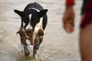 Ảnh động vật tuần: Bướm ruồi đuôi xù kiếm ăn, chó mẹ cứu con...