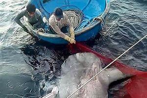 Nghệ An: Bắt được cá hiếm, ngư dân đồng lòng thả về biển