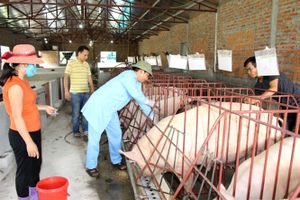 Chủ động ngăn chặn nguy cơ xâm nhiễm bệnh dịch tả lợn Châu Phi
