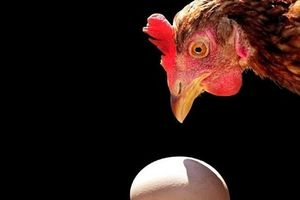 Vật lý học trả lời câu hỏi: Con gà hay quả trứng có trước?