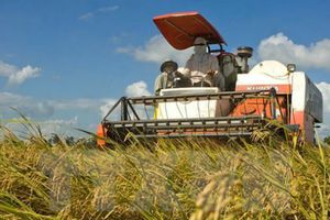 Vietnam-WEF Cooperation in Agriculture Becomes Fruitful: Official