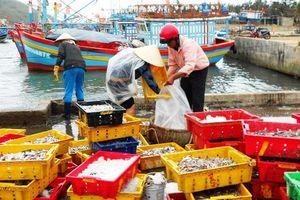 Phù Cát (Bình Định): Siết chặt tình trạng tàu cá vi phạm lãnh hải nước ngoài