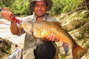 Loài cá có giá trị như vàng, mệnh danh 'vong bất liễu ngư'