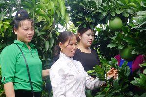 Hội viên phụ nữ xã Hát Lót giúp nhau phát triển kinh tế
