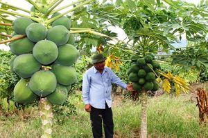 Làm giàu ở nông thôn: Trang trại tổng hợp, nuôi con gì, trồng cây nào cũng lãi khá