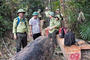 Hàng loạt cán bộ kiểm lâm Quảng Nam xin nghỉ việc