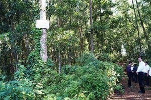 Quảng Ngãi: Thu hồi trên 14.000ha đất lâm nghiệp giao cho dân