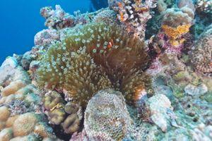 Lặn ngắm san hô ở Komodo, Indonesia