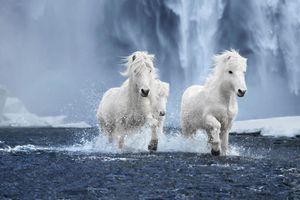 Bộ ảnh siêu thực đẹp mê hồn về những chú ngựa trắng giữa vùng băng giá