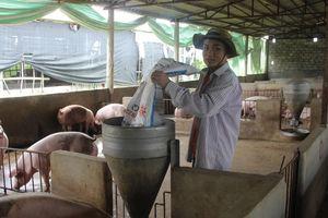 Xây dựng khu trang trại chăn nuôi tập trung, quy mô lớn