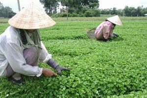 BẢN TIN TÀI CHÍNH-KINH DOANH: Xuất khẩu dệt may đạt gần 10 tỷ USD, thu 24 triệu/tháng nhờ trồng rau má