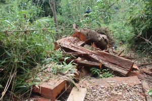 Giám đốc Ban quản lý rừng ở Quảng Nam bị cách chức trong Đảng