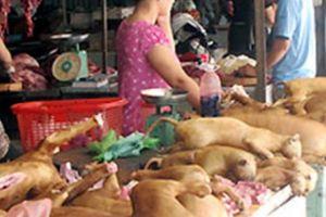 Bỏ ăn thịt chó, bớt đi án mạng từ miếng thịt chó