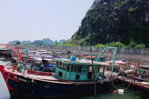 Hi Phòng di di dân Qung Ninh cm tàu  ng phó vi siêu bão Mangkhut