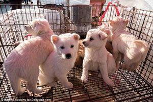 'Đám tang con chó già' ở Nhật Bản khiến người Việt ngỡ ngàng