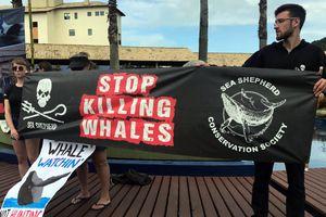 Đằng sau thất bại của Nhật trong đề xuất 'săn cá voi thương mại'