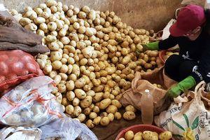 Còn 120 tấn khoai tây Trung Quốc tại chợ nông sản Đà Lạt