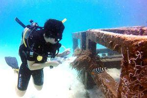 Tuần lễ AWARE toàn cầu: Kêu gọi hành động bảo tồn đại dương
