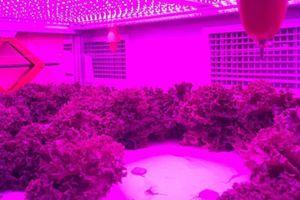 Trồng cây bằng điện, giải pháp nông nghiệp sạch mới