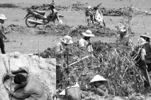 Phú Yên: Thương lái 'hét giá' đá đen, dân đổ xô đào bới
