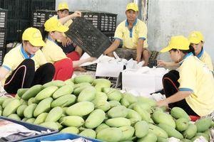 Khởi động dự án ACIAR - cải thiện thu nhập của nông dân trồng xoài vùng ĐBSCL