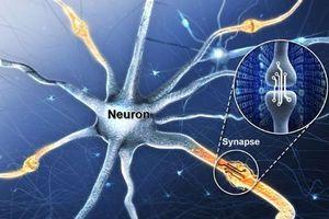 Chế tạo thiết bị hoạt động như não người