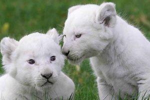 Chiêm ngưỡng những con vật đắt nhất thế giới