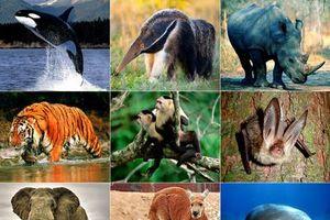 Vi phạm quy định về bảo vệ động vật nguy cấp có thể bị phạt 15 năm tù