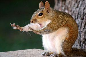 Khoảnh khắc siêu hài hước của động vật khiến bạn không thể nhịn cười