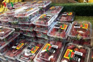 Australia hỗ trợ người trồng dâu tây đối mặt với khủng hoảng