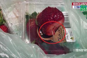 Bê bối dâu tây bị găm kim nhọn bên trong chấn động Australia