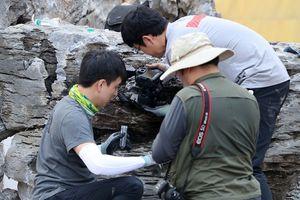 Phát hiện ổ 'kiến sát nhân' có thể gây chết người ở Hàn Quốc