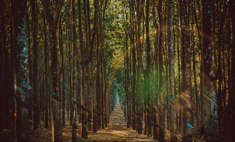 Pho nui Gia Lai dep hung vi trong anh 'Dau an Viet Nam' - Anh 9